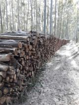Leña, Pellets Y Residuos Leña Leños No Troceados - Lenha de Pinus e Eucaliptus