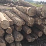 null - Ash Logs 2SC-4SC 7.5'+