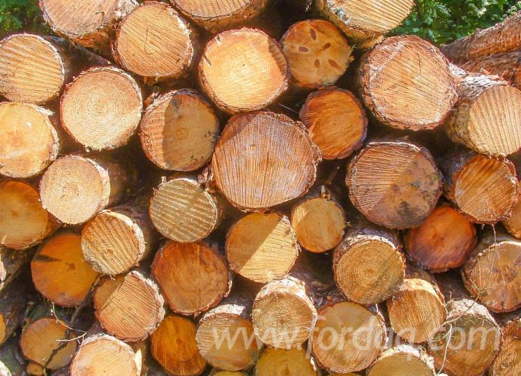 Pine-Logs-30-