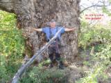 Offres Bulgarie - Vend Grumes De Tranche Peuplier Clone Robusta