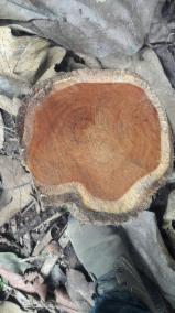 Teak Hardwood Logs - Teak Logs 120+ cm