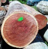 Balsamo Hardwood Logs - Need Balsamo Logs 15-30+ cm