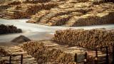 Softwood  Logs For Sale - Poplar / White Pine Logs 4,6,8,10,12