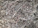 薪炭材-木材剩余物 木片(源自林场) - 木片-树皮-下脚料-锯屑-削片 木片(源自林场) 榉木