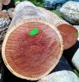 Balsamo Hardwood Logs - Need Balsamo Logs 40+ cm