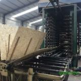 Engineered Panels CE For Sale China - 6 mm OSB 3