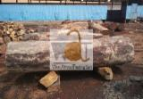 Teak Hardwood Logs - Teak / Tali / Doussie Square Logs 30+ cm