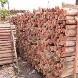 ISPM 15 Certified Hardwood Logs - Acacia Logs 12-20 cm