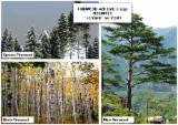Energie- Und Feuerholz Brennholz Ungespalten - Kiefer  - Föhre, Fichte   Brennholz Ungespalten