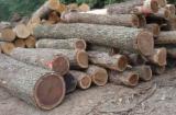 Korea, South Hardwood Logs - Buying Walnut Logs 80+ cm