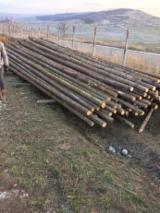 Construction Round Beams - Fir -- mm -- Construction Round Beams Romania