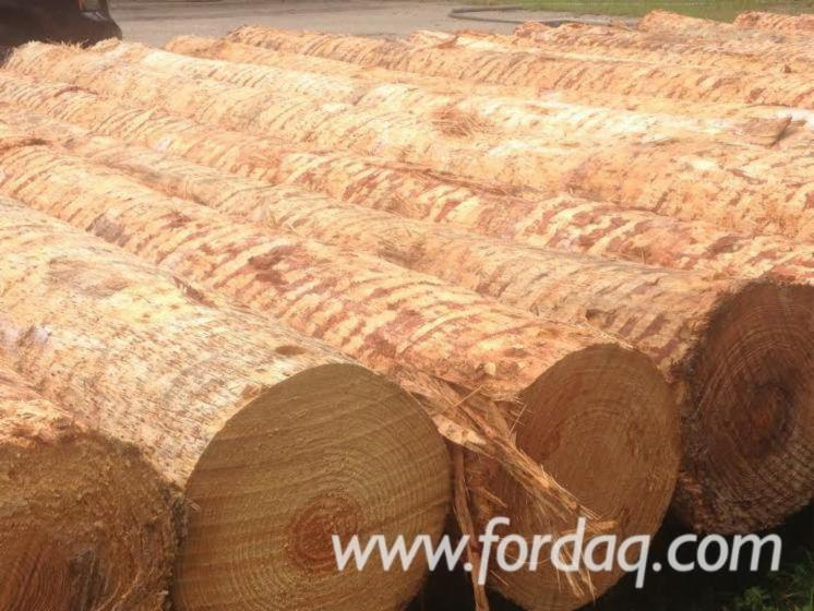 Southern-Yellow-Pine-Logs-40-100