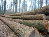 软木:原木 轉讓 - 锯材级原木, 花旗松
