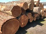 Douglas Fir, Oregon Pine  Softwood Logs - Douglas Fir Logs 40+ cm