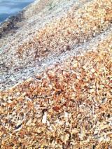 薪炭材-木材剩余物 木片(源自林场) - 木片-树皮-下脚料-锯屑-削片 木片(源自林场) 红松
