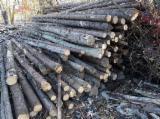 Meko Drvo  Trupci Za Prodaju - Građevinske Okrugle Grede , Jela -Bjelo Drvo
