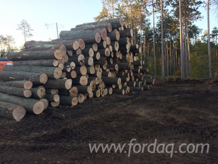 Schnittholzst%C3%A4mme--Walnuss---Hard-Maple--Zuckerahorn