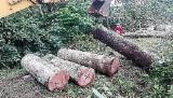 Wälder und Rundholz - Schnittholzstämme, Balsam