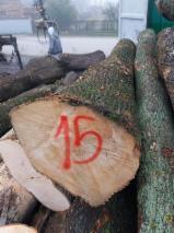 Laubrundholz  Zu Verkaufen - Schnittholzstämme, Esche