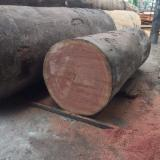 Sapelli Hardwood Logs - Sapelli Logs 40+ cm