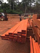 Laubschnittholz, Besäumtes Holz, Hobelware  Zu Verkaufen Kamerun - Padouk: Verkauft Balken mit Länge, Breite und Dicke nach Ihrer Wahl