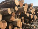 Schnittholzstämme, Kirsche