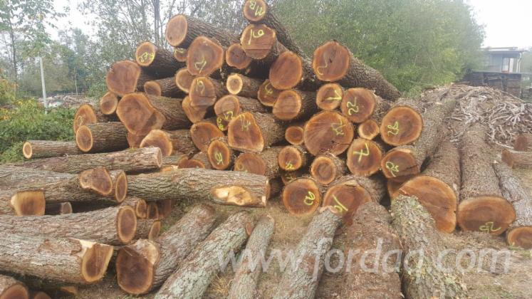 Walnut-Logs-30-