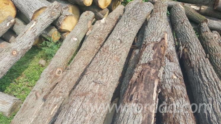 Walnut Logs 30+ cm