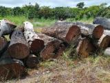 Teak Hardwood Logs - Tali / Doussie Logs 30+ cm