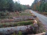 Forest And Logs France - PEFC/FFC Oak Logs 30+ cm