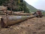 Tractor Forestier - Vand Tractor Articulat Forestier -TAF - 72 000 lei, negociabil