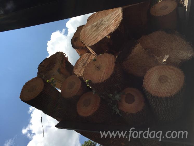 Ash-Saw-Logs