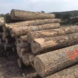 Hardwood Logs Suppliers and Buyers - Ash Logs 2SC-4SC 7.5+ ft