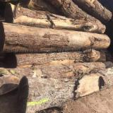 China Hardwood Logs - Black Walnut Logs 2SC-4SC 7.5+ ft