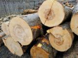Hardwood  Logs For Sale - 33-55 cm Beech Saw Logs Romania