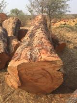 Portugal Hardwood Logs - Mussivi / Rhodesian Teak / Kiaat Square Logs 40+ cm