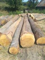 null - Schnittholzstämme, Robinie , Buche, Eiche
