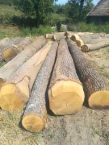 Tvrdo Drvo  Trupci Za Prodaju - Za Rezanje, Bagrem, Bukva, Hrast