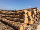 France Softwood Logs - PEFC/FFC Spruce Logs, 25; 30+ cm diameter