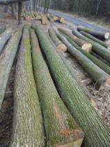 Wälder Und Rundholz Europa - Schnittholzstämme, Eiche