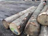 Wälder und Rundholz - Schnittholzstämme, Roteiche