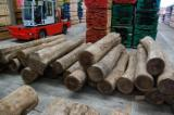 Hardwood Logs For Sale - Register And Contact Companies - Red Elm Logs 30+ cm