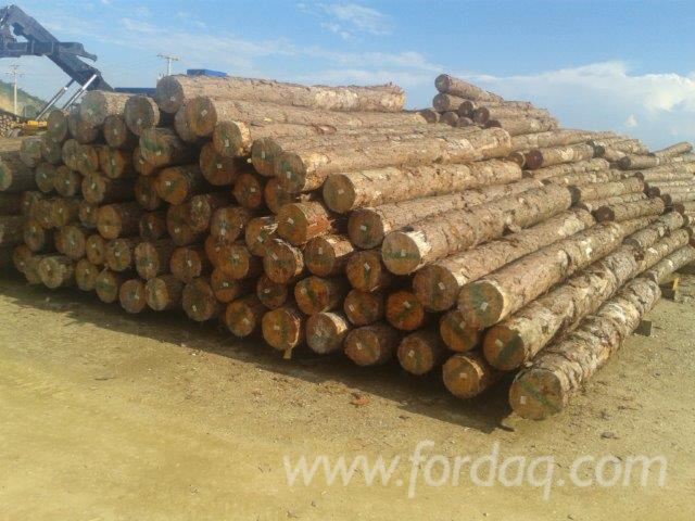 Elliotis-Pine-ABC-Logs-20-