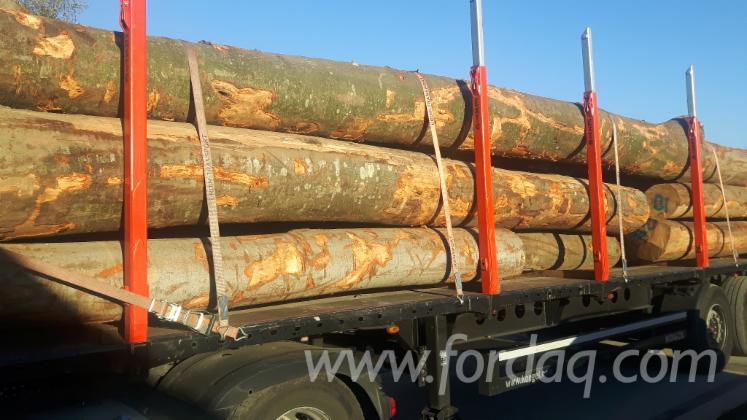Beech-Saw-Logs-30-