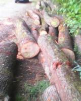 Kaufen Oder Verkaufen  Furnierholz, Messerfurnierstämme Hartholz  - Eiche rundholz durchmesser von 45 - 90 (furnier moglich)