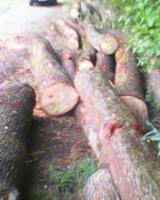 Croatia - Fordaq Online market - Oak Veneer Logs 45 - 90 cm