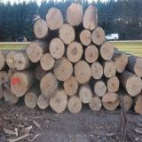 Find best timber supplies on Fordaq - Kaster Logging Limited - Hard Maple #1 Veneer Logs 12