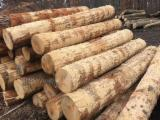 Hardwood  Logs - American Red Logs(without bark);2SC+;12''+,7'+