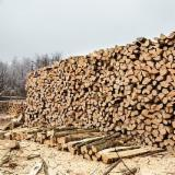 薪炭材-木材剩余物 薪碳材 未开裂原木 - 劈好的薪柴-未劈的薪柴 薪碳材/未开裂原木 橡木