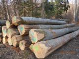null - Buchen-Stammholz zu verkaufen